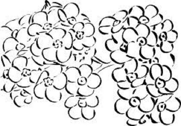 Forget Me Not Flower Coloring Pages