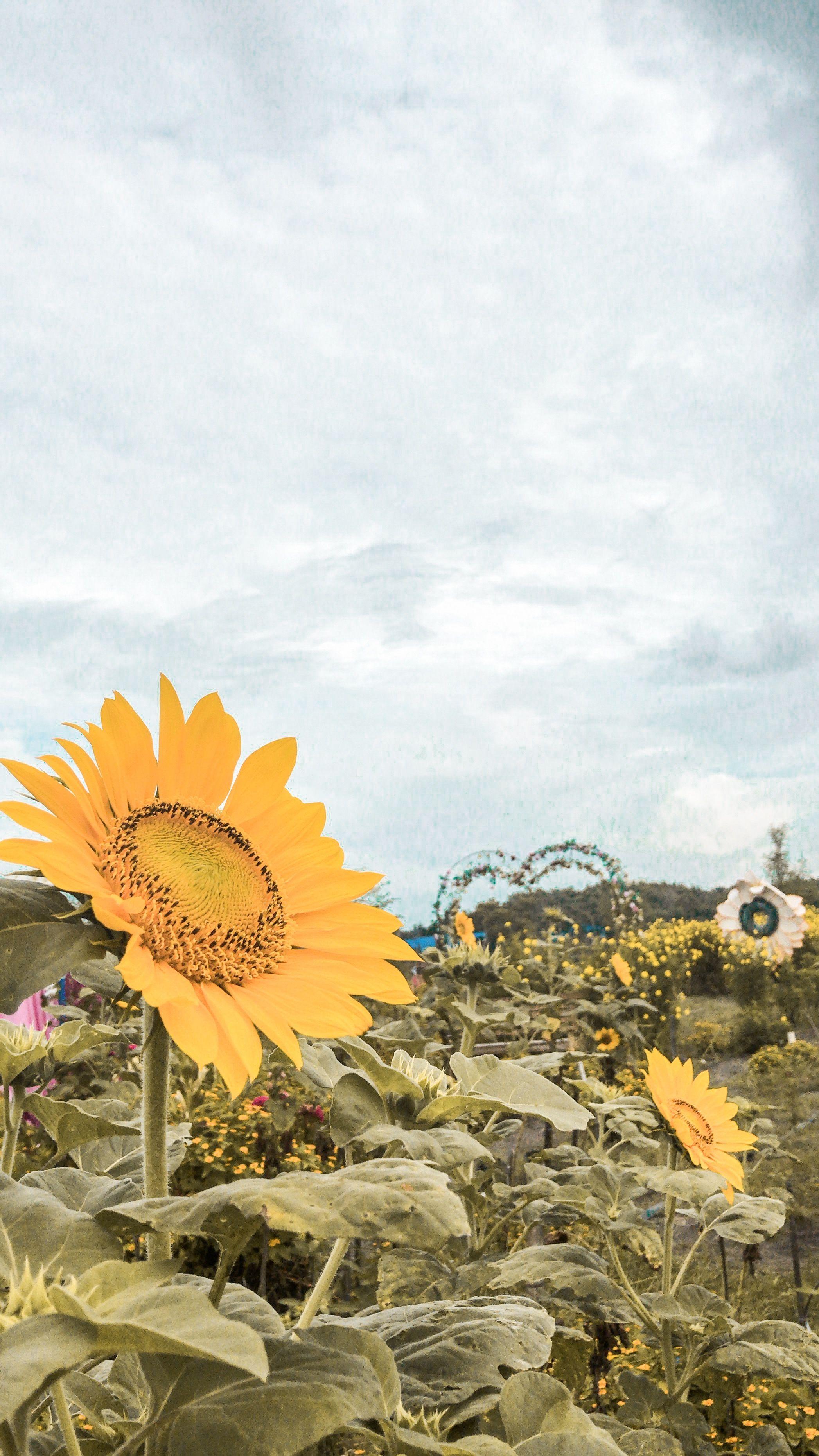 100.000+ Gambar Taman Bunga & Bunga Gratis - Pixabay
