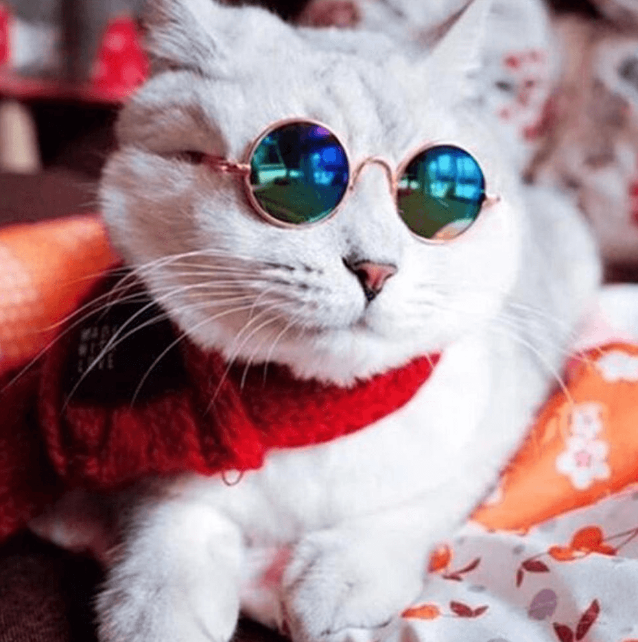 Get Your Camera Ready You Might As Well Have At Least One Photo Of Your Cat In Sunglasses These Glasses Are Small And Pet Sunglasses Pet Photo Prop Cool Cats