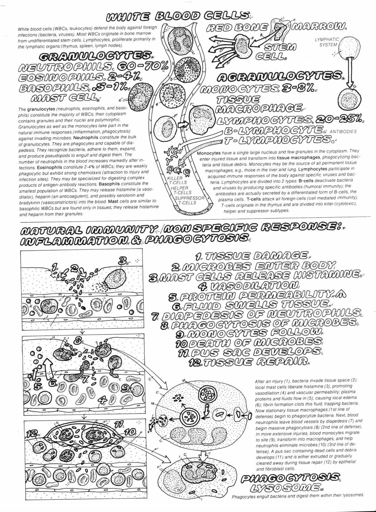 Biology Colouring Book