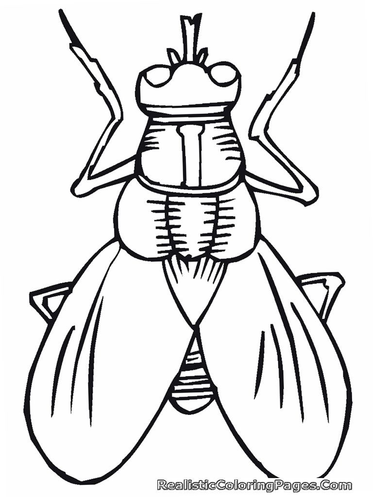 cartoon insect coloring pages