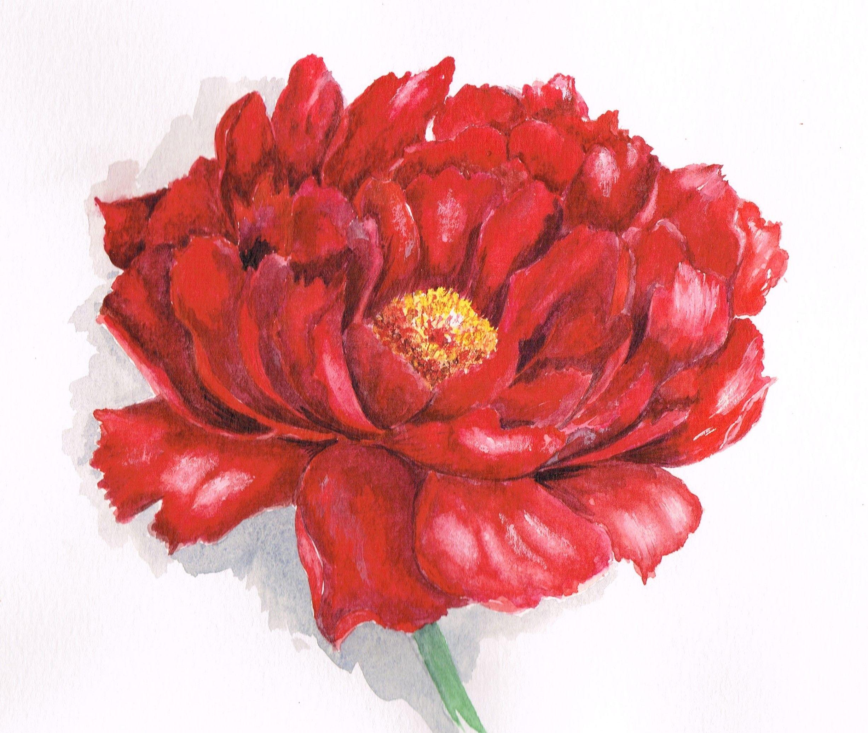 Vincent Jeanerot Je Peins Les Fleurs En Botanique Vincent Jeannerot Editions De Saxe