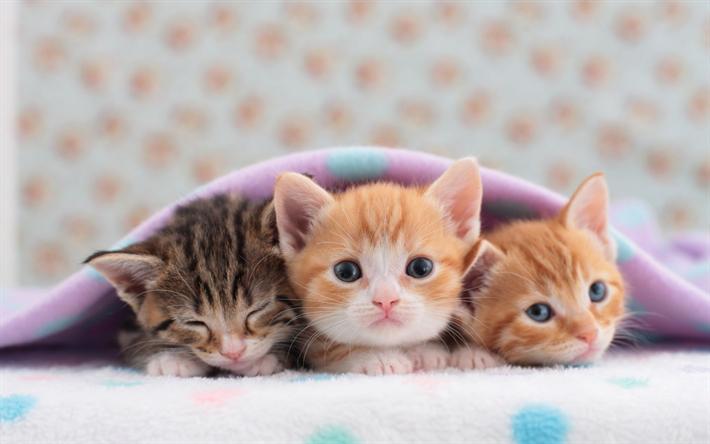 Herunterladen hintergrundbild kleine kätzchen, trio, niedliche tiere, haustiere, ingwer kätzchen, kleine katzen besthqwallpapers.com
