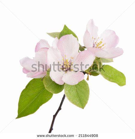 Inspirational Flower White Background