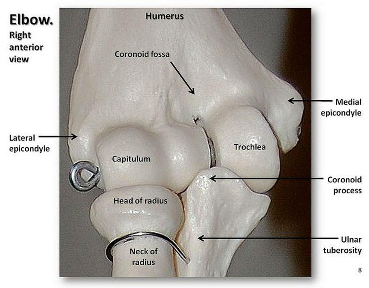 Anatomy of the elbow | Radiology | Pinterest | Radiology
