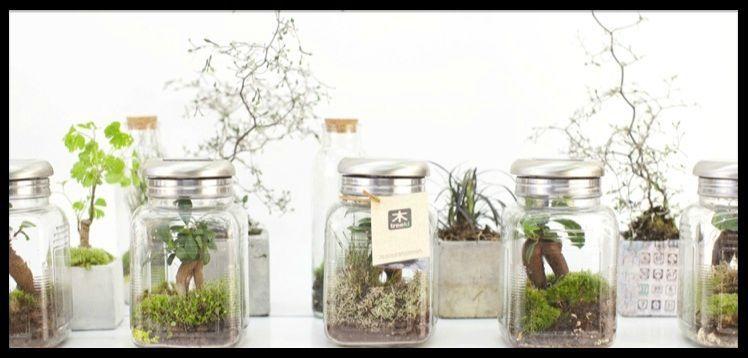Terrarium - Un jardin de verre dans votre maison - Treeki