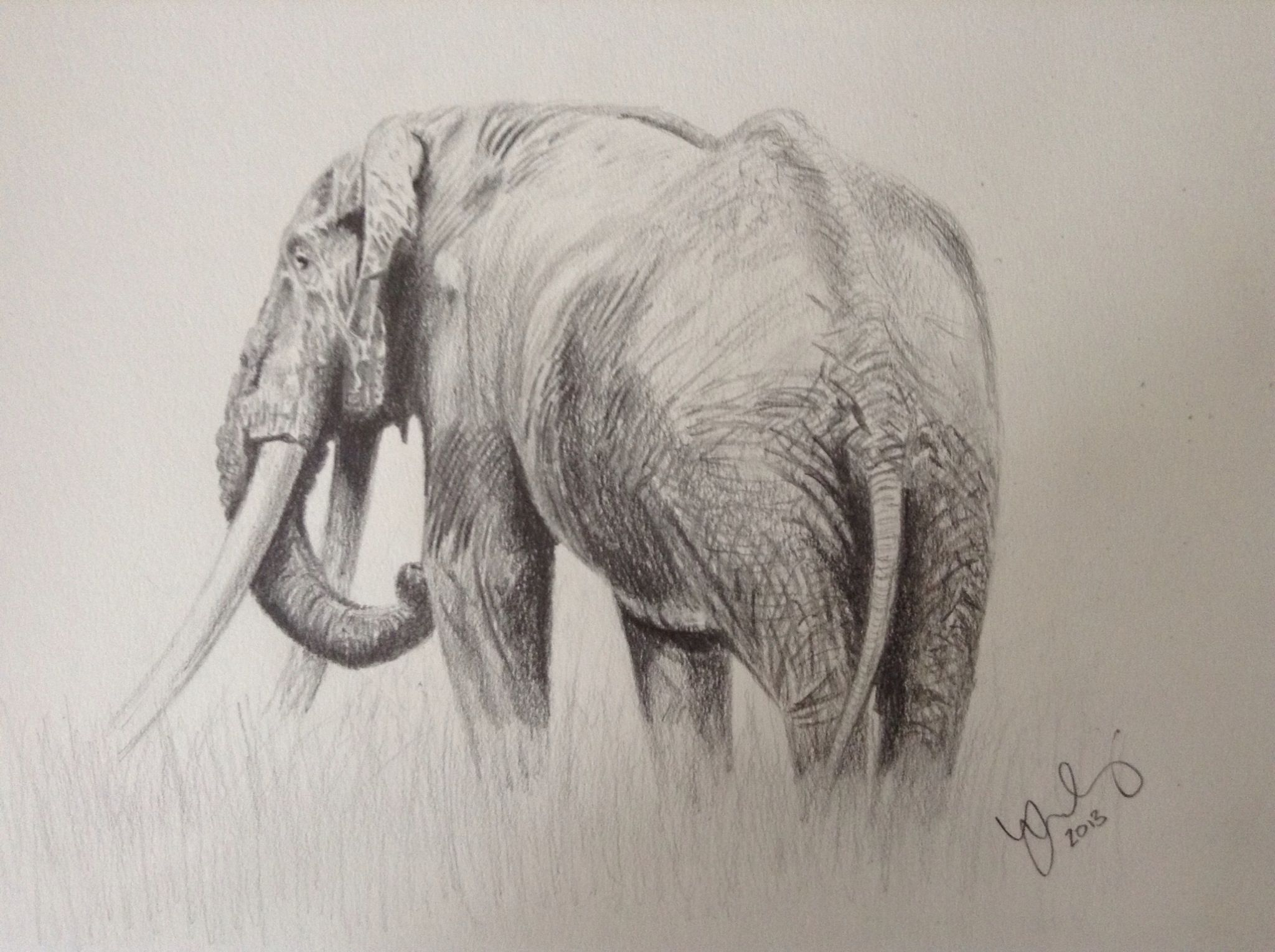 Line Drawings Of African Animals : Elephant drawing in pencil. i enjoyed sketching an because