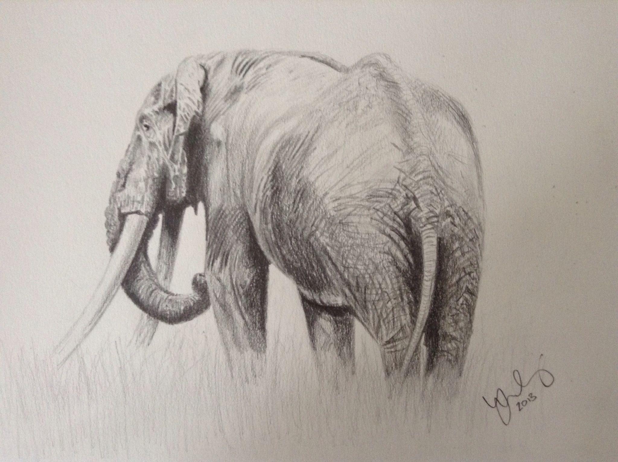 86 best Elephants images on Pinterest