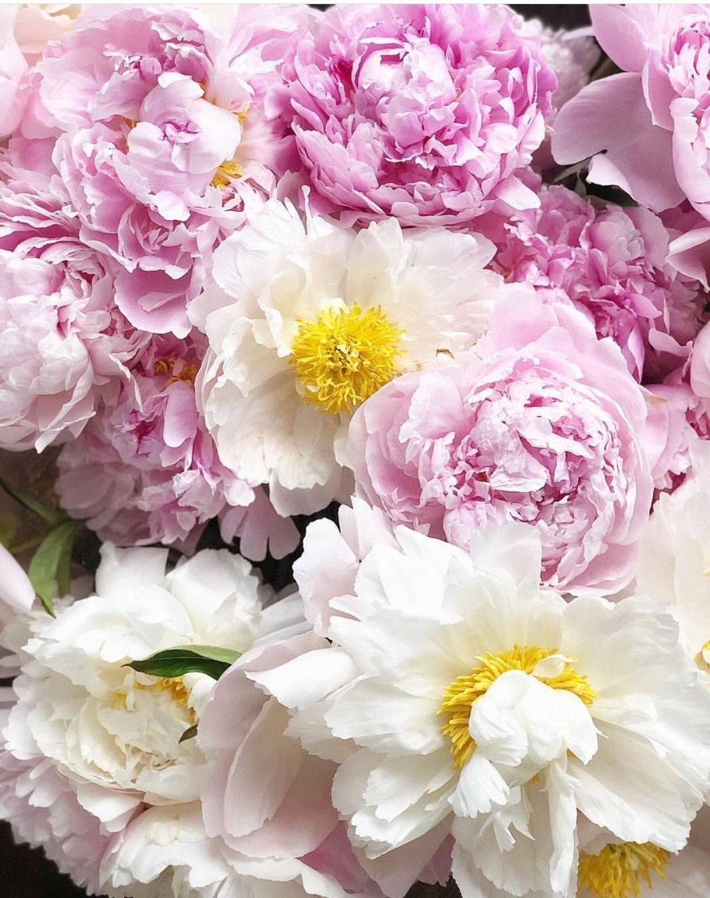 All The Pretty Flowers August 3 2018 Pinterest Flowers Pretty