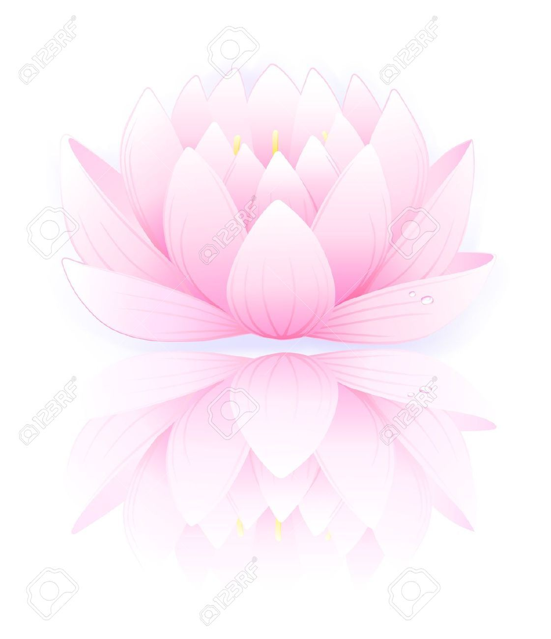White Lotus Flower Background - Google Search
