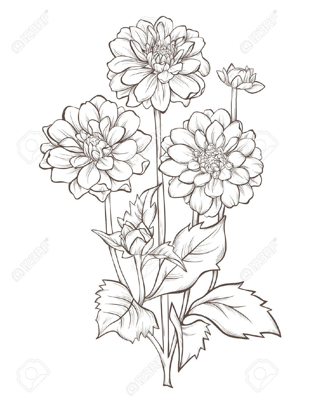 Vector Stock - Beautiful monochrome black and white dahlia flower isolated  on white background. Clipart Illustration gg70741444 - GoGraph