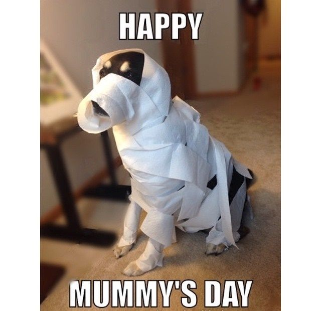 Mothers Day Meme Dog Mothers Day Meme Dog Mothers Day Dog Mom Quotes