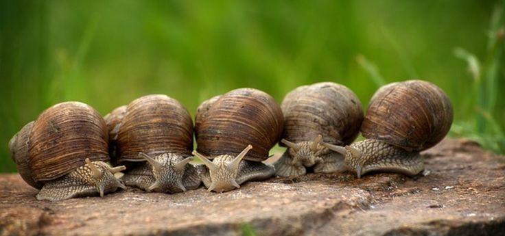 Schnecken im Garten bekämpfen Tipps und natürliche Mittel