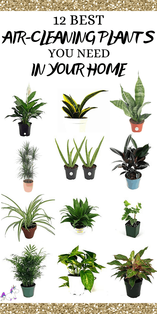 12 Best Air Cleaning Houseplants That Are Impossible To Kill No Green Thumbs Needed The Mummy Front Plants Air Cleaning House Plants Plants For Hanging Baskets