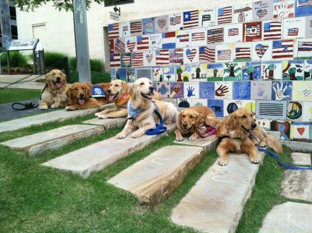 At Oklahoma City Bombing Memorial Retriever Puppy Dogs Golden