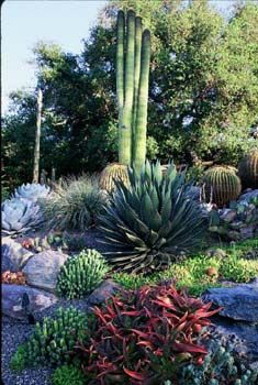 Cactus Amp Succulent Inspirations For The Rock Garden At The