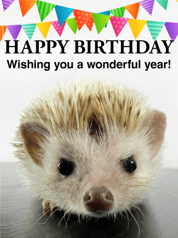 Image result for happy birthday hedgehog