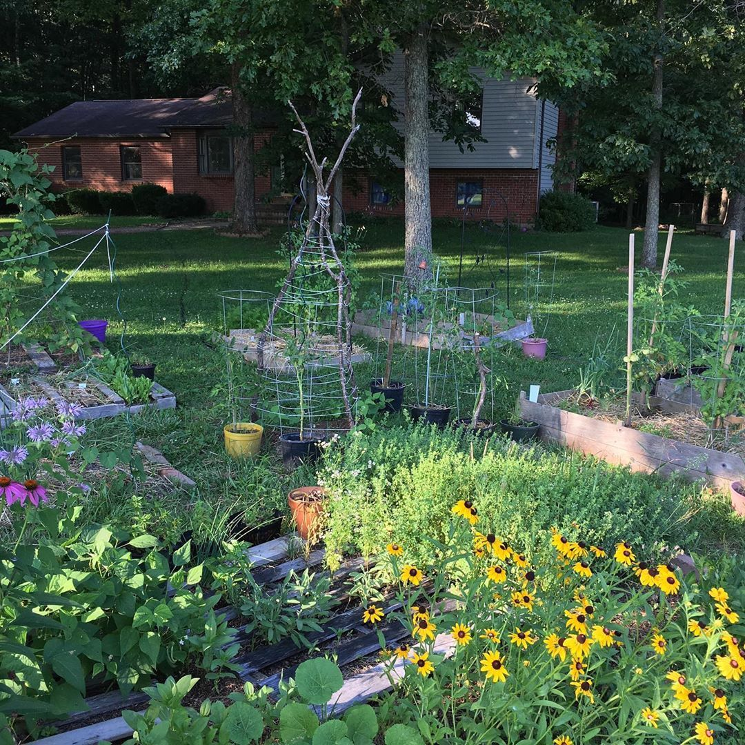 TUESDAY EVENING GARDEN TOUR Because I was hiking Sunday   Its reaching out of control level in the garden right now Im pruning tying treating amending cursing the deer wh...