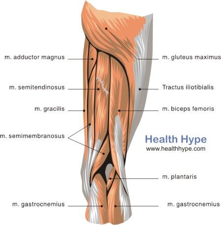 Posterior Thigh Muscles | To Do: | Pinterest | Thigh muscles ...