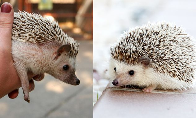 32 Exotic Low Maintenance Cool Pets That Are Legal To Own