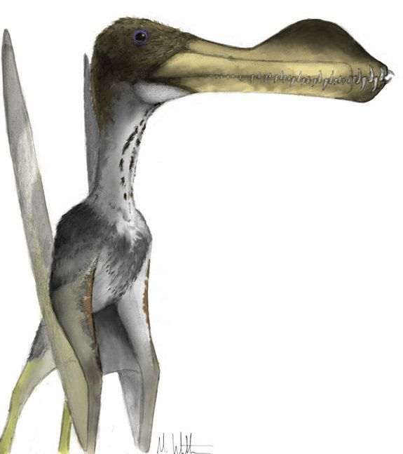 biggest bird to have ever lived - Google Search