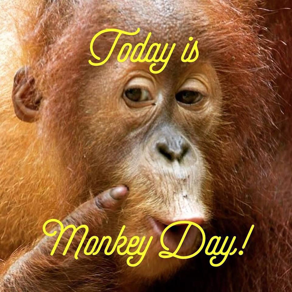 Happy monkey day! Origin is unknown but monkey day was created to protect  our fellow primates. So if you happen to come across one give them a shout  out.