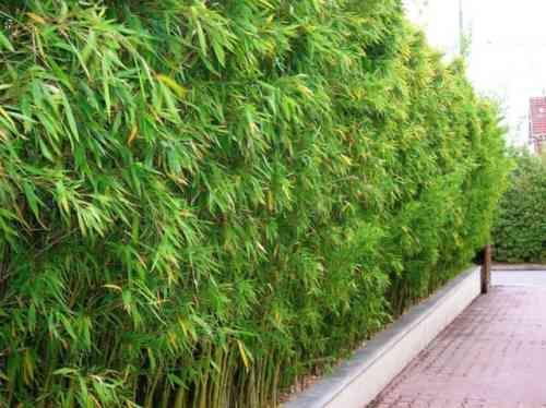 Plantation bambou : comment la réussir ? | Pinterest