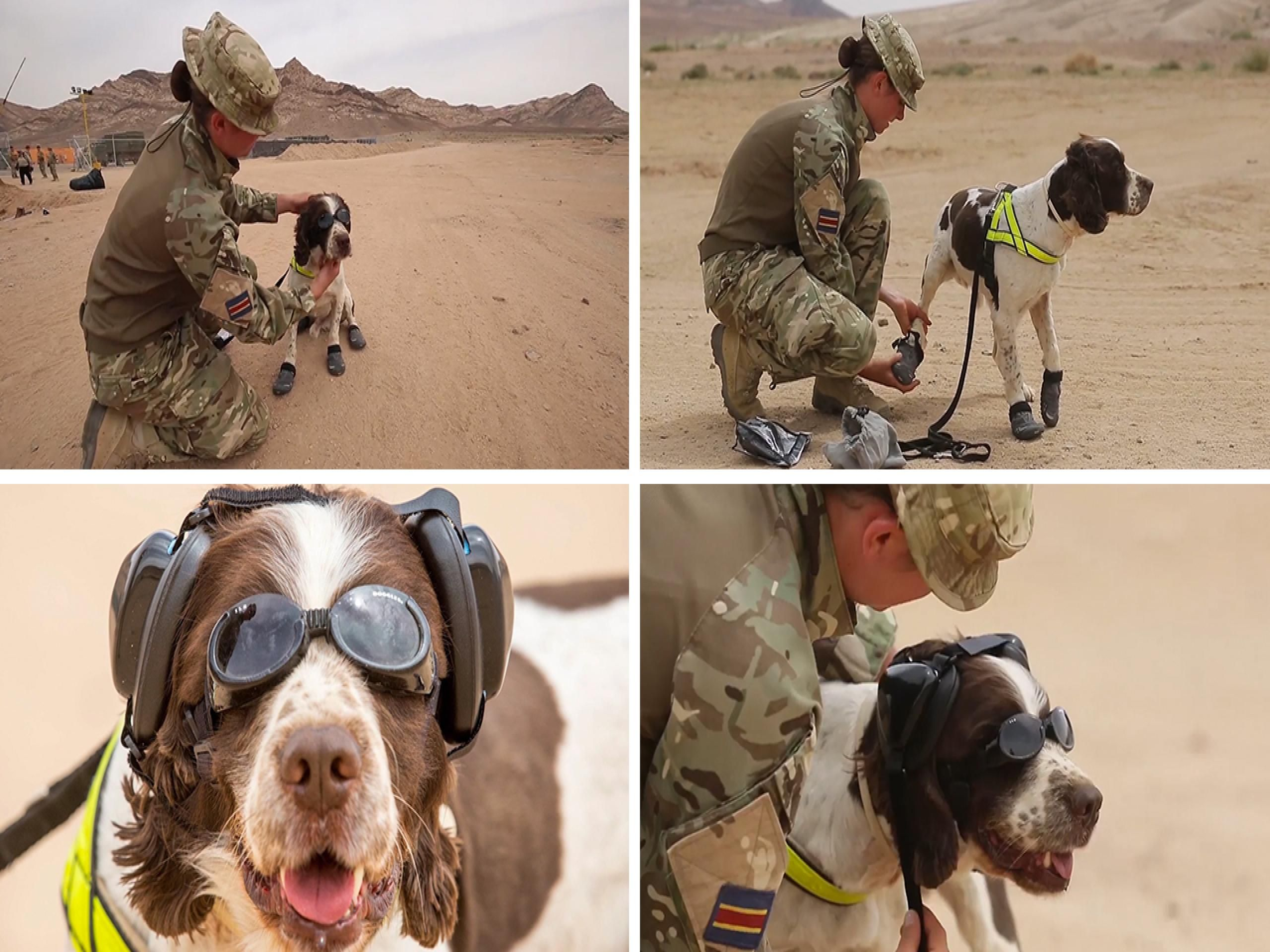 British army dogs have now been equipped with goggles