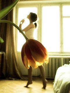 Tulip Girl <3