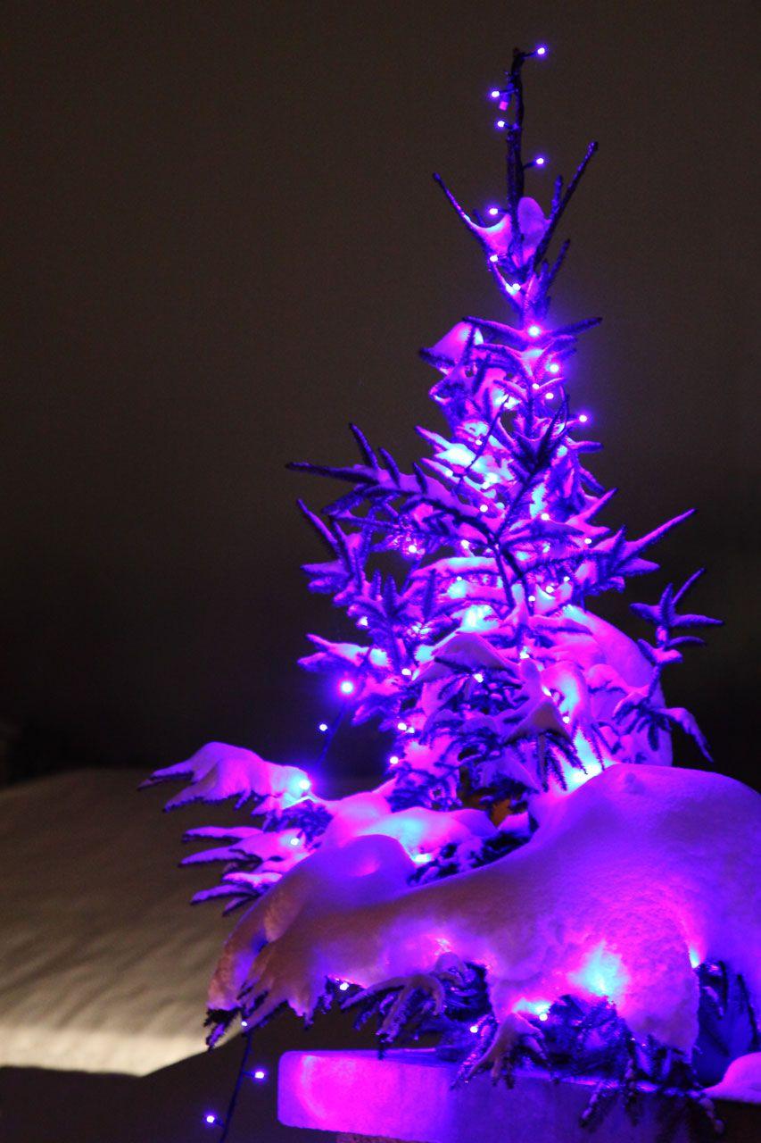 Purple Trees Purple Christmas Tree Free Stock Photo Hd Public Domain Pictures