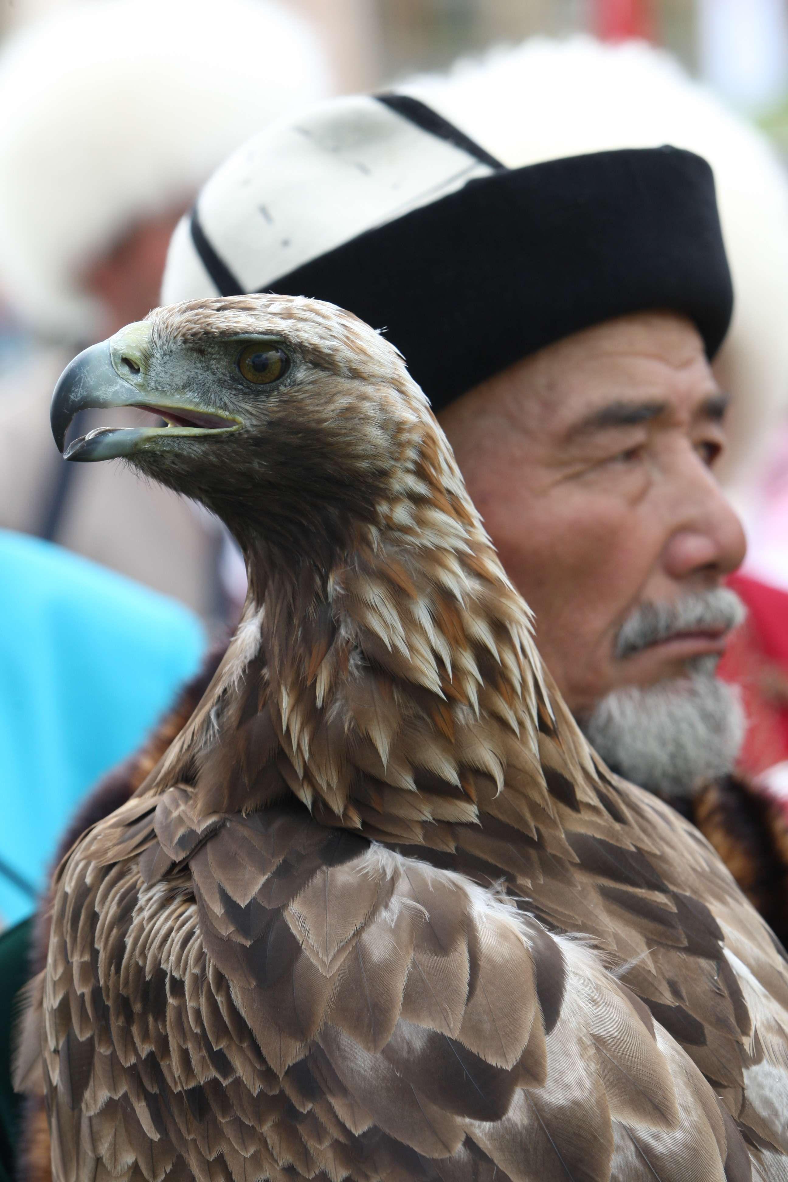 Image result for Kyrgyz falconry