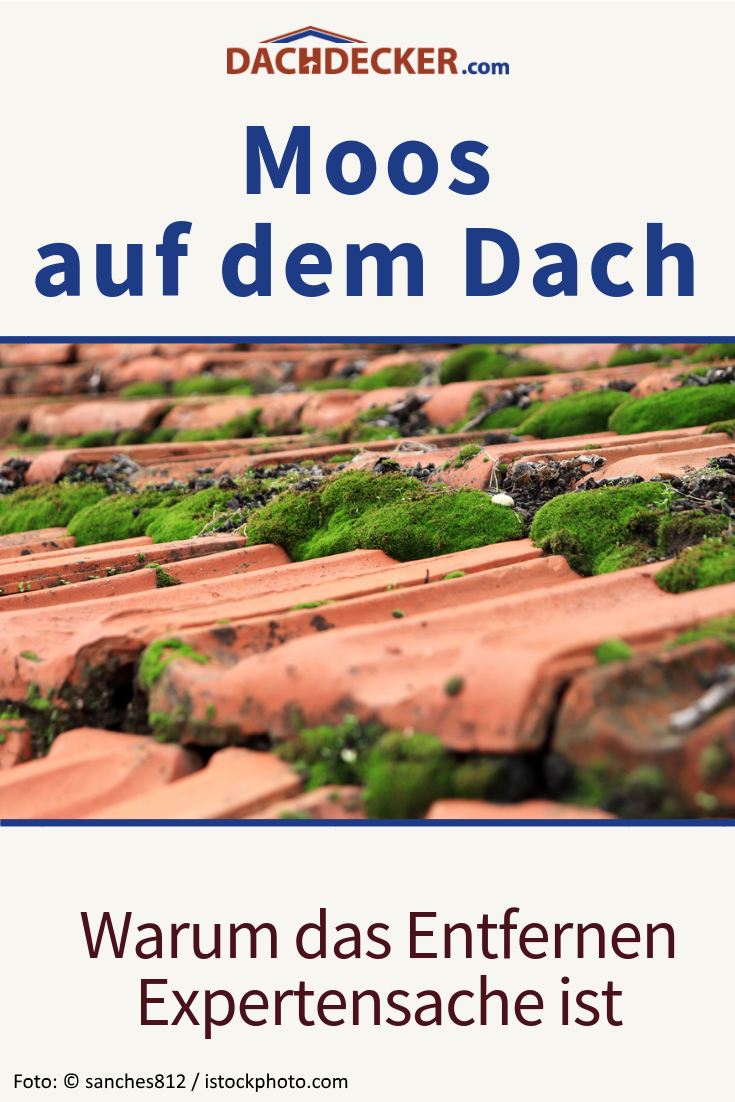 Moos Auf Dem Dach Warum Das Entfernen Expertensache Ist In 2020 Dach Dach Reinigen Moos Entfernen