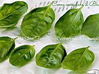 Congelare il basilico fresco per l'inverno