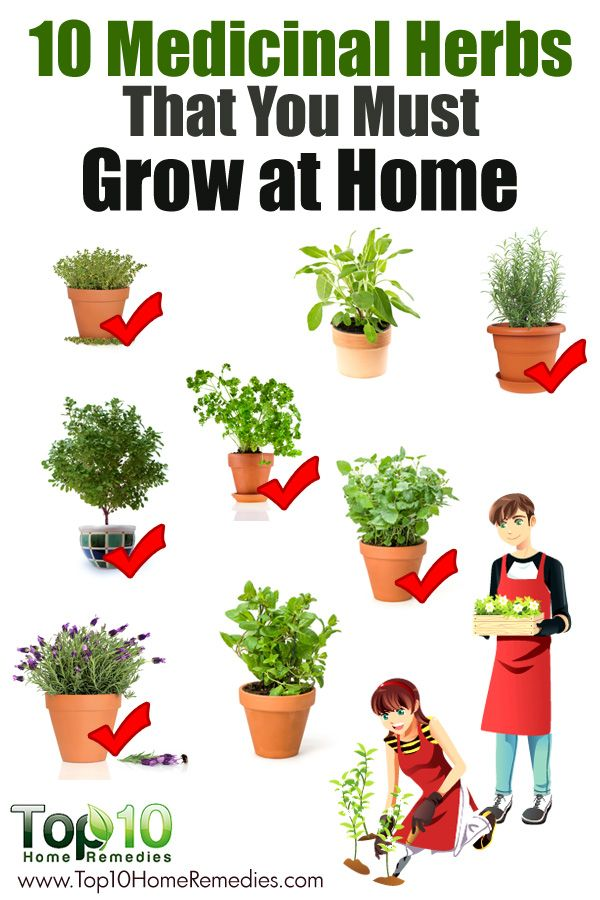 10 medicinal plants you can grow at home interesting health news 39 n 39 facts pinterest. Black Bedroom Furniture Sets. Home Design Ideas