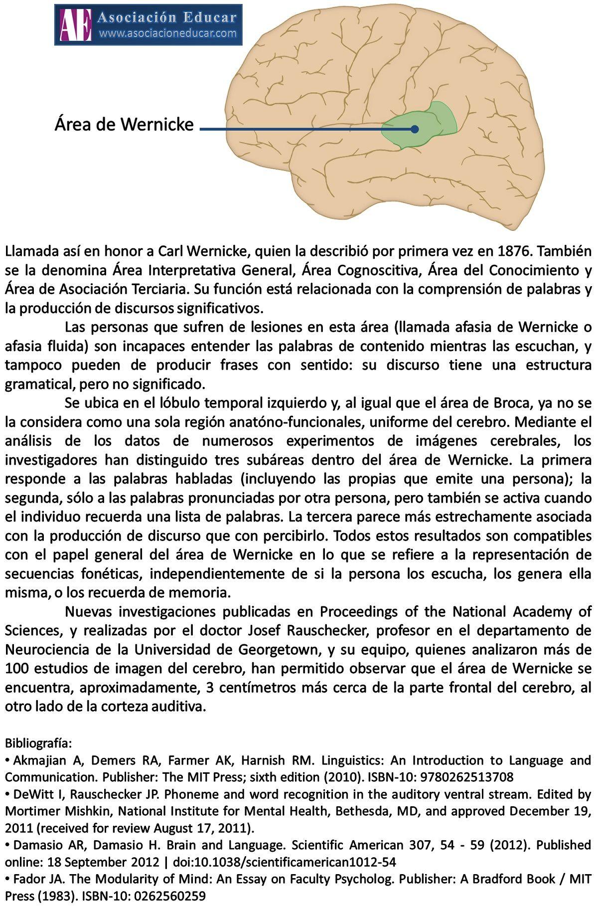 Infografía Neurociencias: Área de Wernicke.   Asociación Educar ...