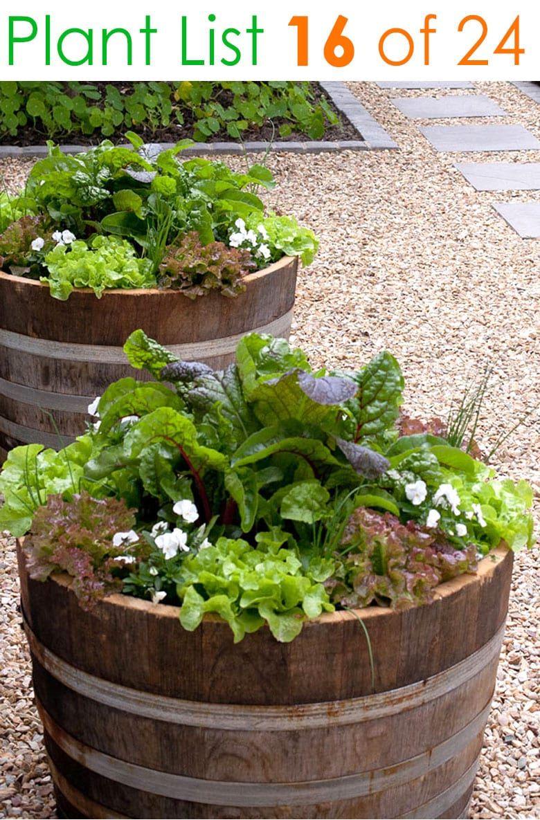 24 Designer Plant Lists For Beautiful Container Gardens Colorful Mixed Flower Pots Combinations Gre In 2020 Small Vegetable Gardens Veggie Garden Wine Barrel Garden