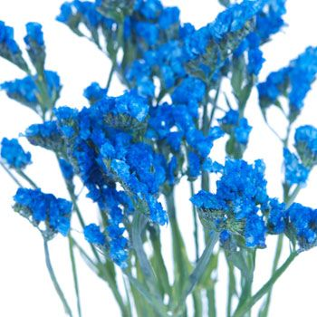 Statice flower jewel blue tinted blue wedding flowers flowers fiftyflowers statice flower jewel blue tinted mightylinksfo