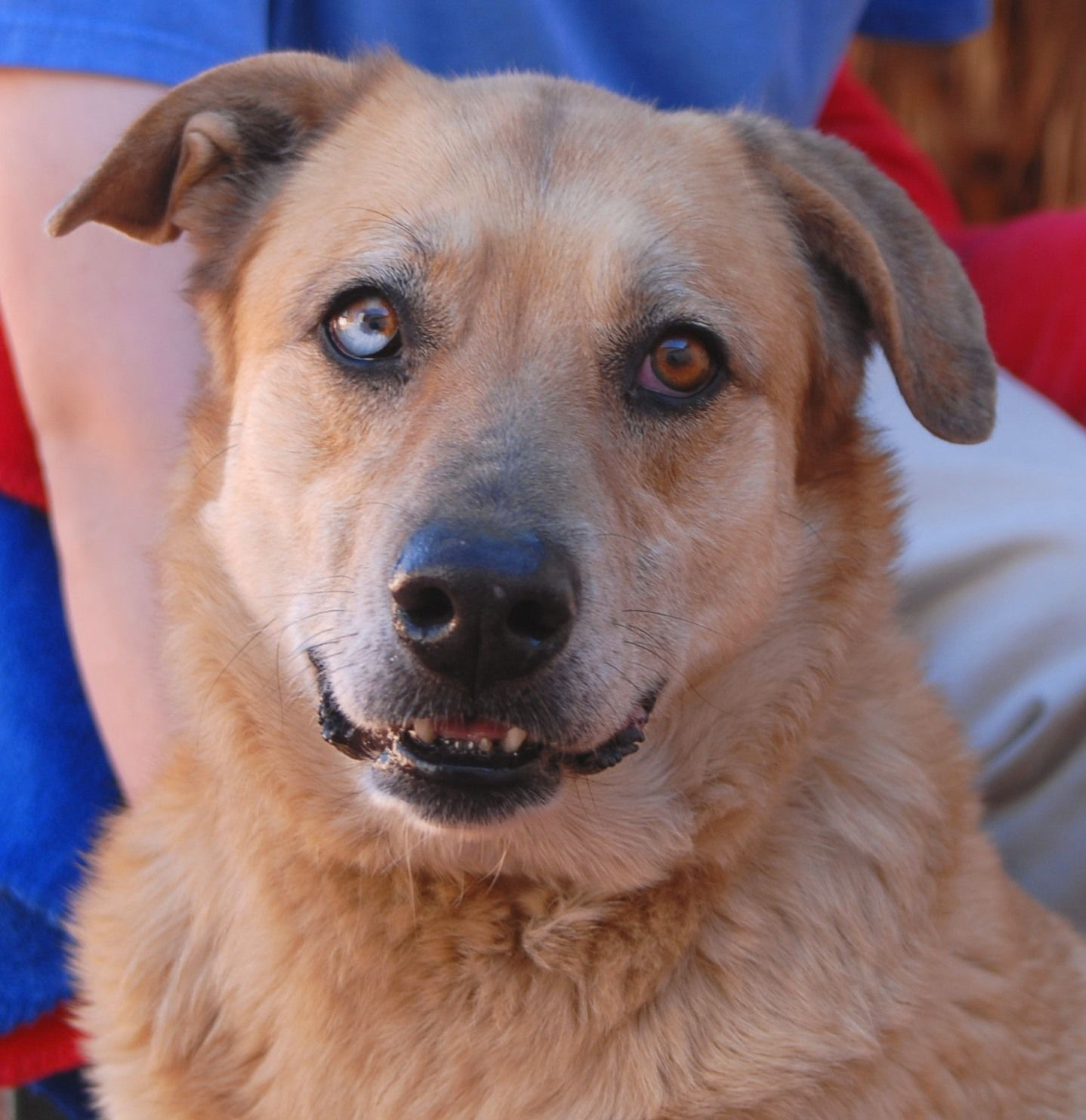 Trixie is a cheery girl with beautiful vitality and she