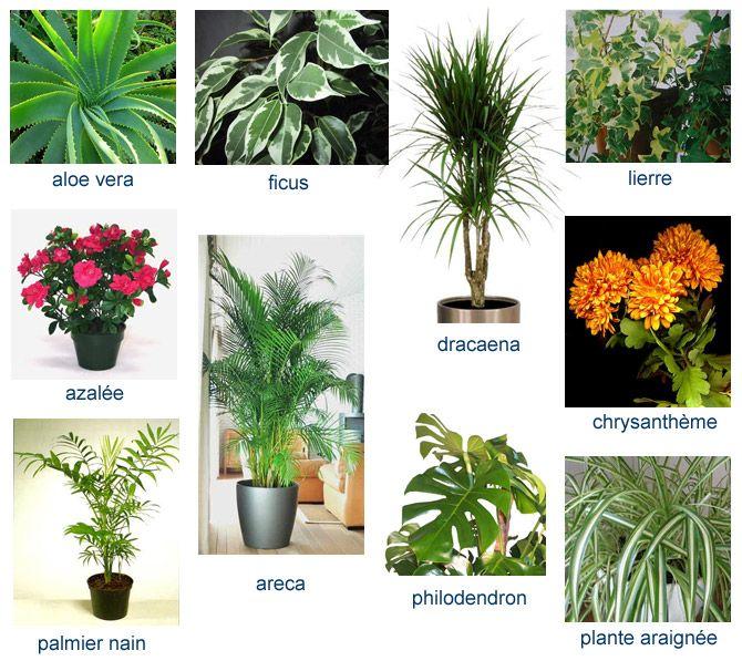 Sois-belle et dépollue-moi : le pouvoir dépolluant des plantes d'intérieur - notre-planete.info