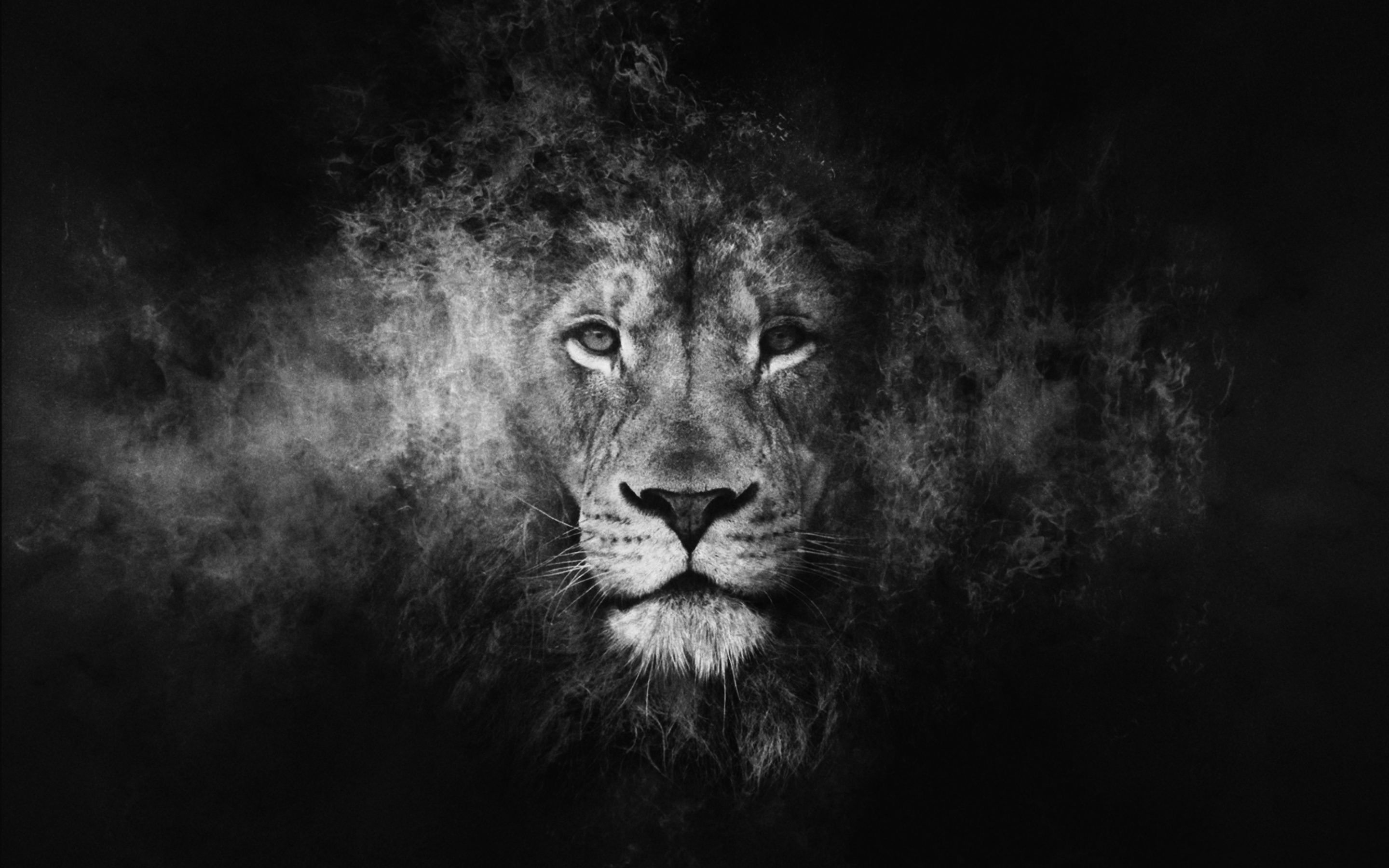 Lion Black And White Wallpaper Phone On Wallpaper 1080p Hd