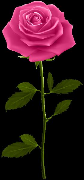 Pink Rose With Stem Png Clip Art Image Pink Rose Tattoos Trendy Flowers Rose Flower Png