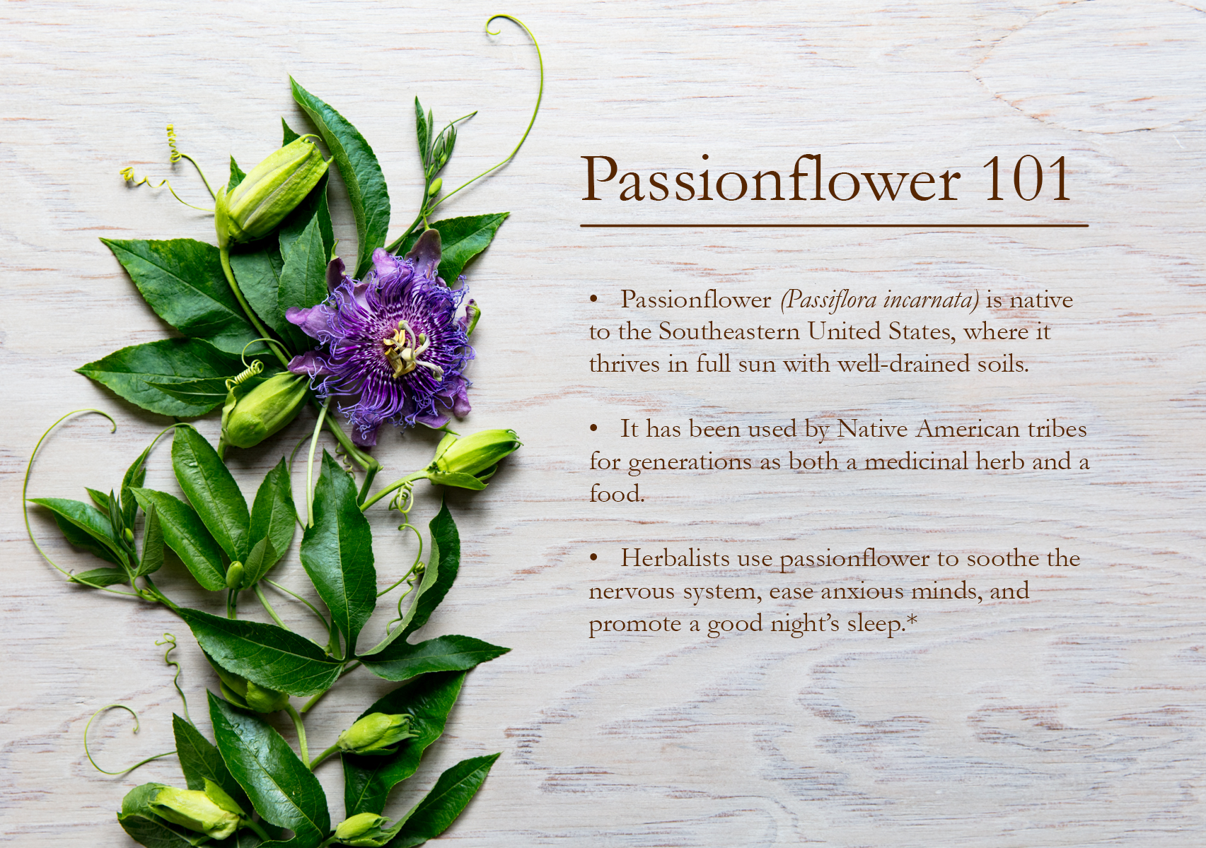 Passionflower 101 Traditional Medicinals Herbal Wellness Teas Passion Flower Herbalism Medicinal Herbs