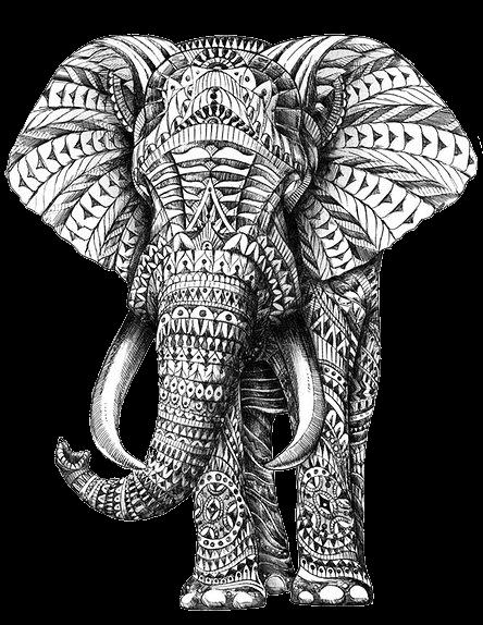 elefante estampado