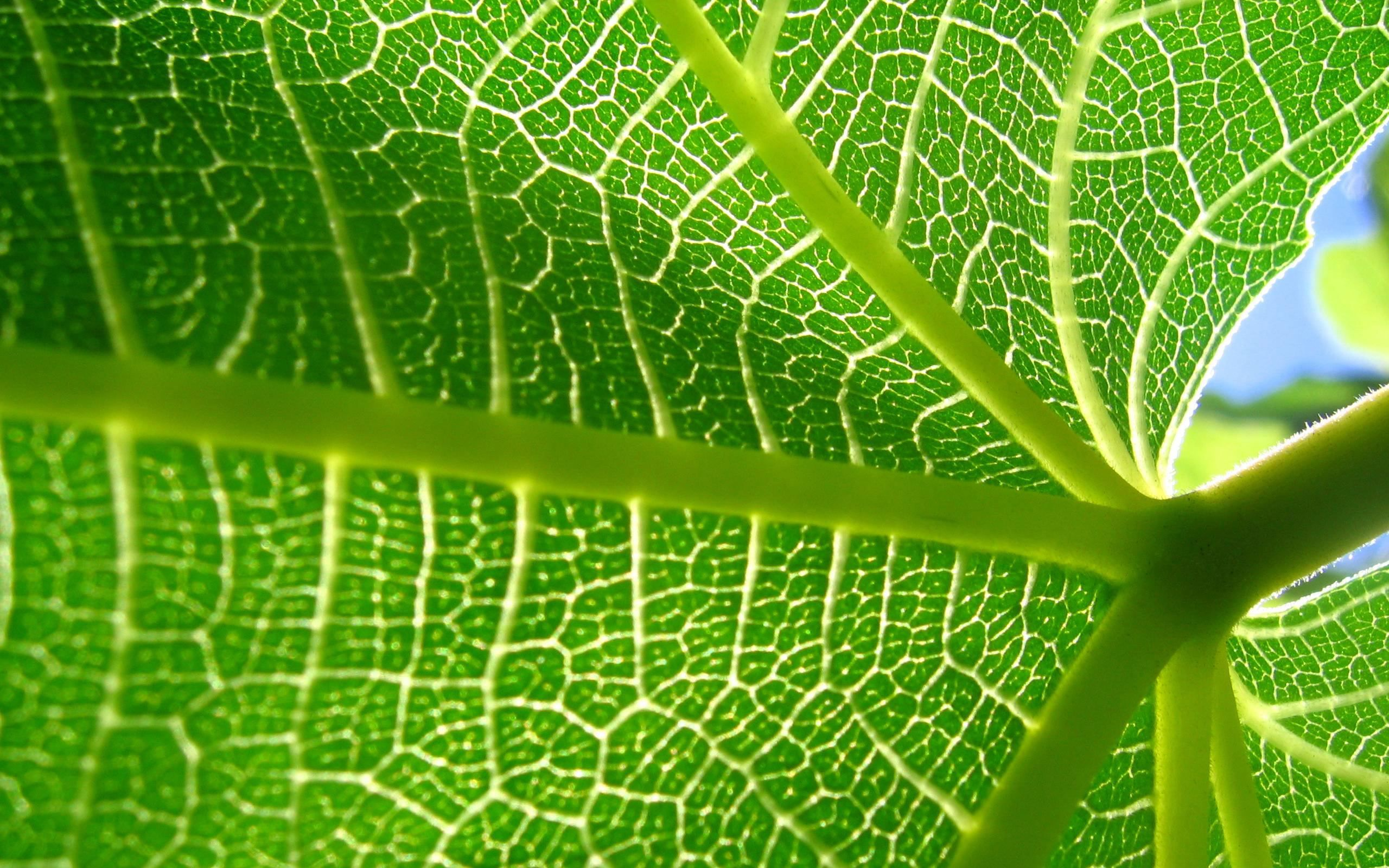 Nature Cell Biology Widescreen 2 HD Wallpapers | Leaves ...