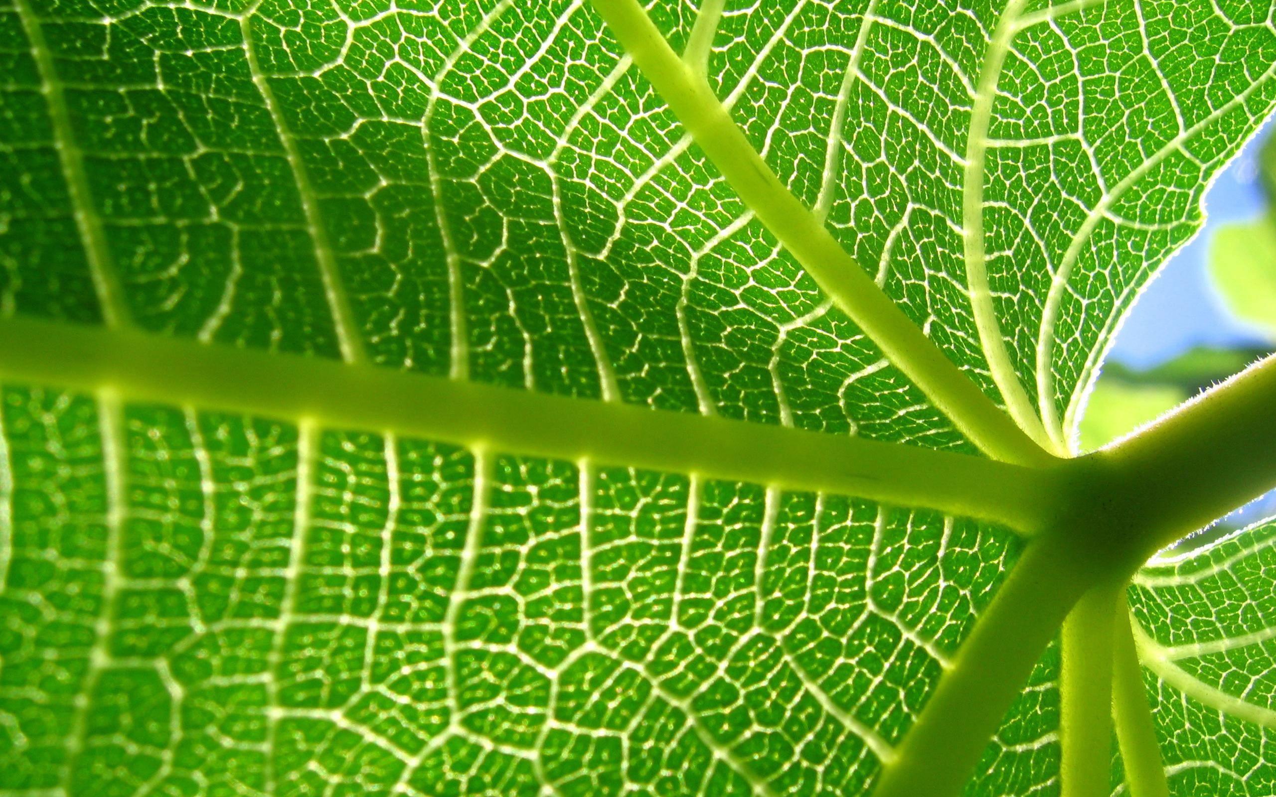 Most Beautiful Nature Leaves Leaf Structure Voronoi Diagram