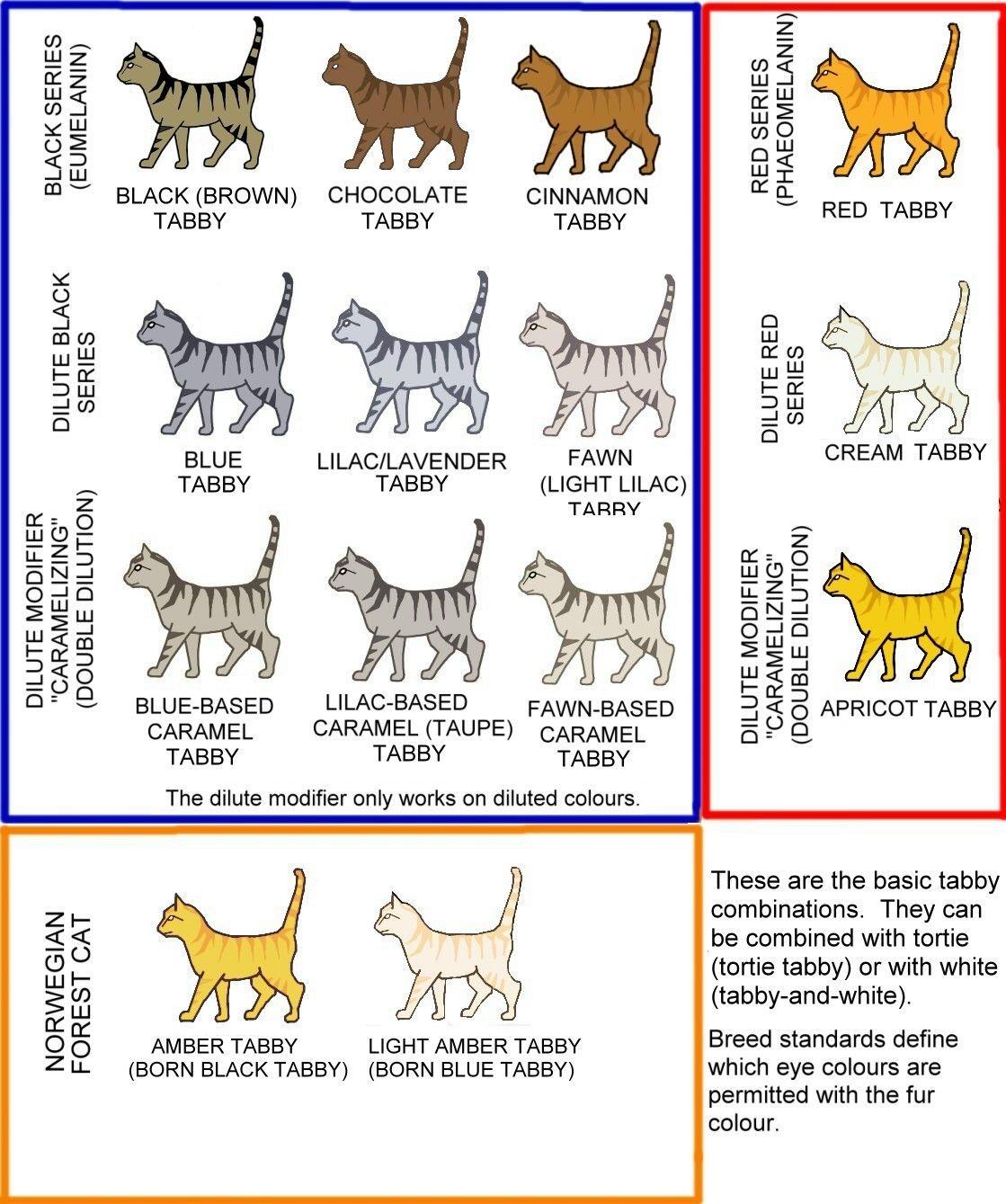 Creo Que Rodriga Es Una Cinnamon Tabby Cat Tabby Cat Pictures Spotted Cat
