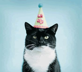 Black White Cat Wearing Birthday Hat