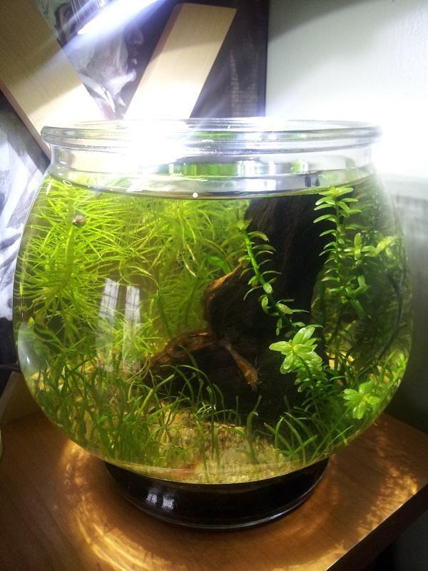 Led 5 Gallon Shrimp Bowl Gallon Nano Aquarium Bowl
