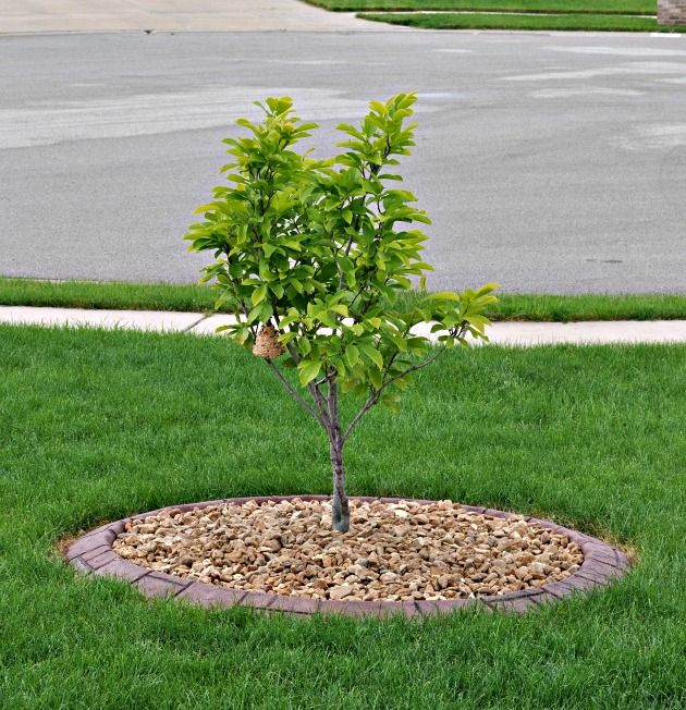 Borders Around Trees: Landscaping After Picture Border Creations Tree Ring With