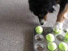 Diy Treat Toys To Keep Your Dog Busy Kol S Notes Diy Dog Stuff